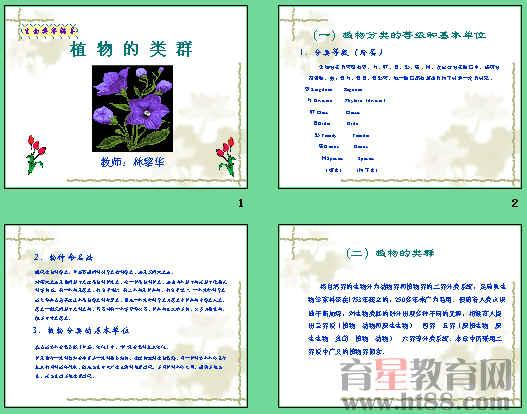 植物的类群等4个)