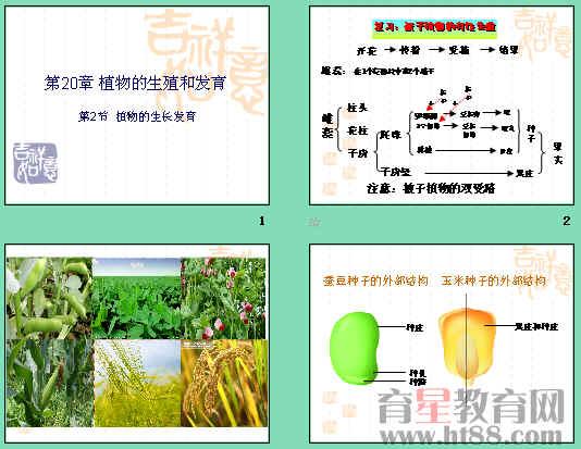 植物的生长发育ppt1 苏科版
