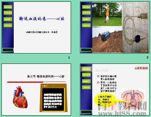 课件利用大量的图片讲述了心脏的结构与功能