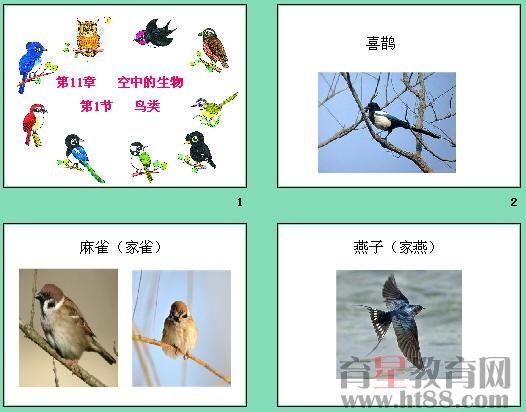 分析了鸟类飞行具备的条件和适应飞行生活的特点