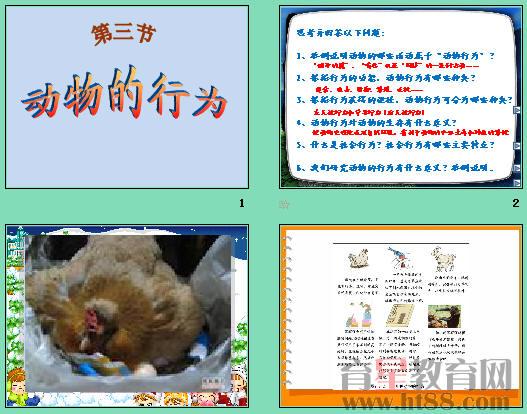 动物的行为ppt15 济南版