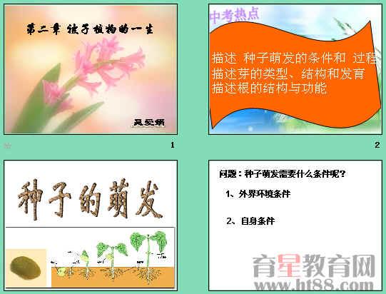 《被子植物的一生》ppt1