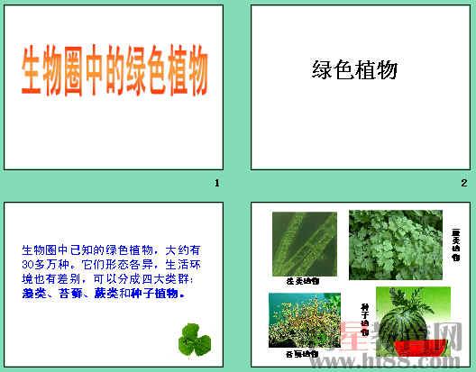 生物圈中的绿色植物ppt11 通用
