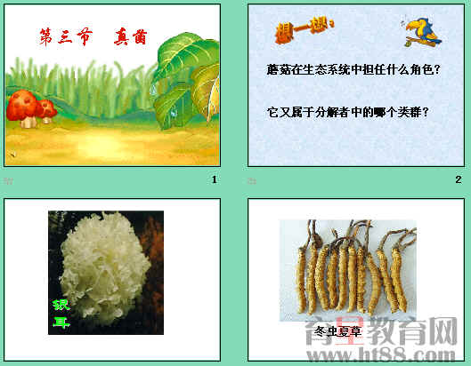 真菌的营养方式,真菌的繁殖,并通过实验用显微镜观察了青霉和曲霉.