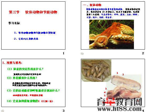 软体动物和节肢动物ppt1