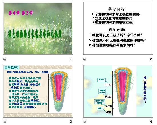 植物根尖结构ppt
