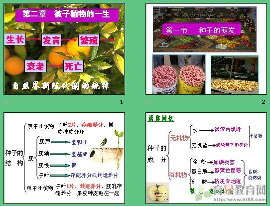 课件讲述了种子了结构及各部分的功能
