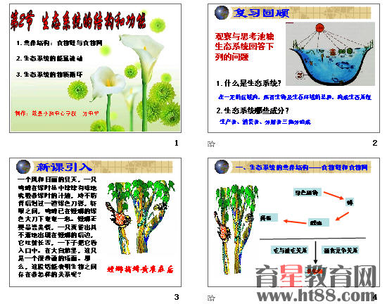 生态系统的结构和功能ppt2