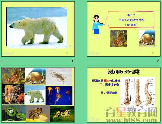 《千姿百态的动物世界》ppt5
