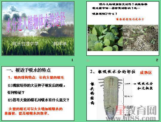 植物筛管手绘图