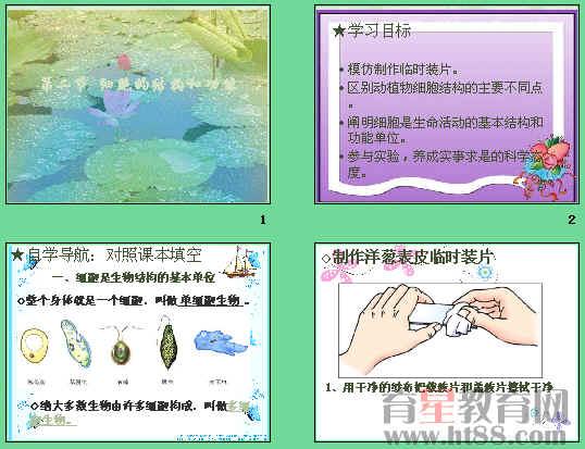 讲述了动植物细胞结构的主要不同点