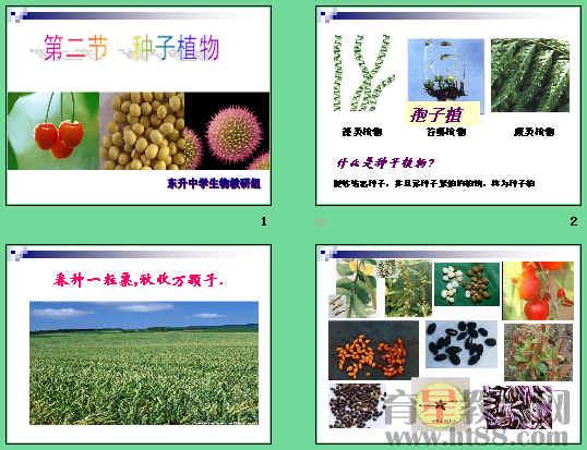 讲述了单子叶植物种子和双子叶植物种子的结构