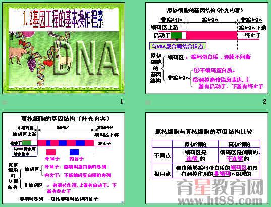 课件讲述了基因工程的基本操作程序的基本步骤