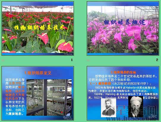 植物组织培养技术ppt6