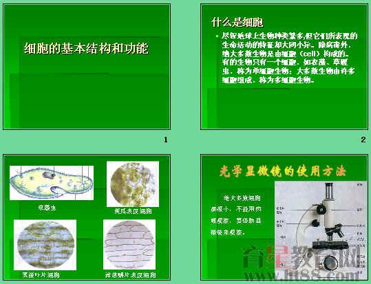 光学显微镜的结构和使用方法