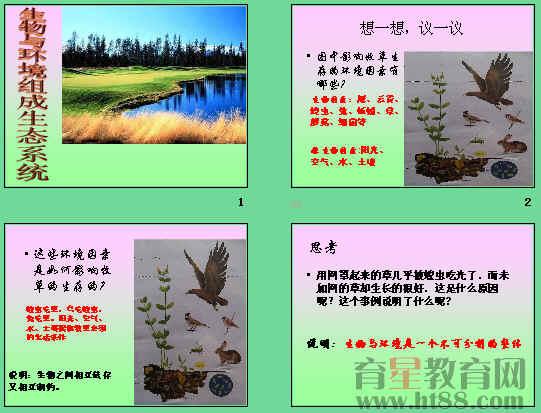 生物与环境组成生态系统ppt2