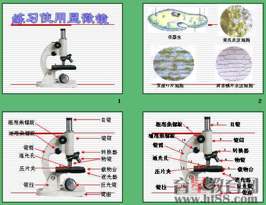 显微镜的使用方法和正确的操作步骤