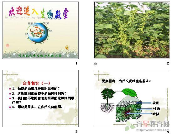 花植物的结构层次