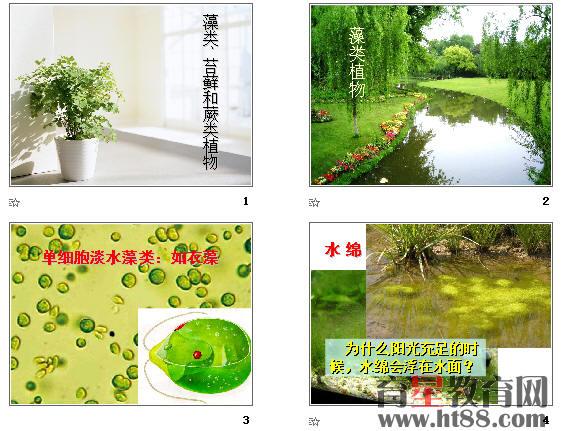 藻类,苔藓和蕨类植物ppt16 人教版