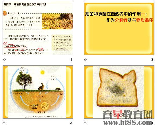 细菌和真菌在自然界中的作用ppt13