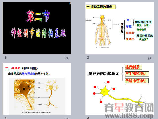 神经调节的结构基础ppt3 济南版