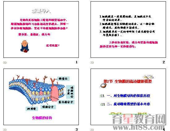 生物膜的流动镶嵌模型ppt73