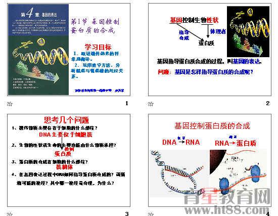 基因指导蛋白质的合成ppt64(2份打包)