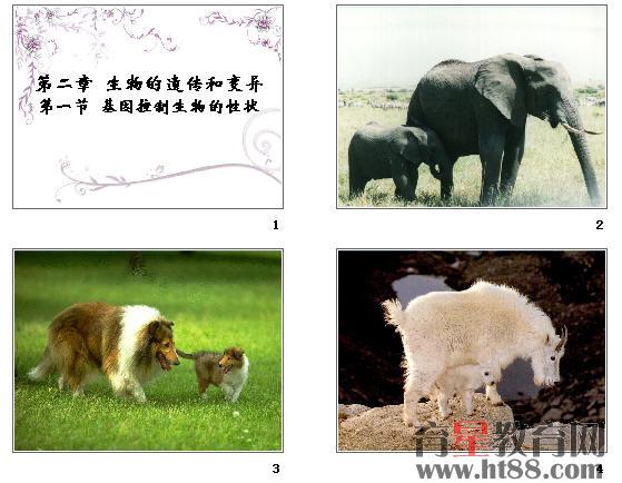 遗传和变异的对比图  动物