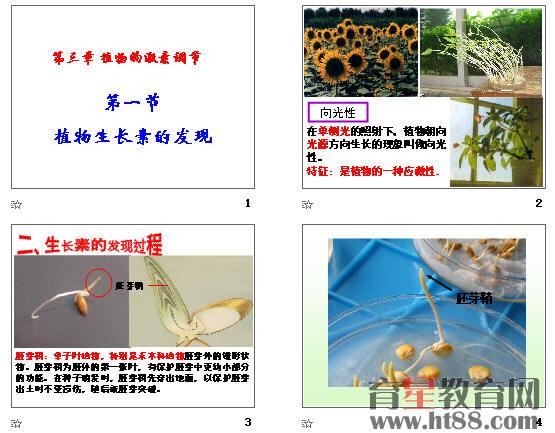 发现过程,植物激素