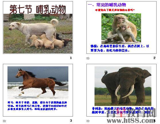 哺乳动物ppt4 人教版