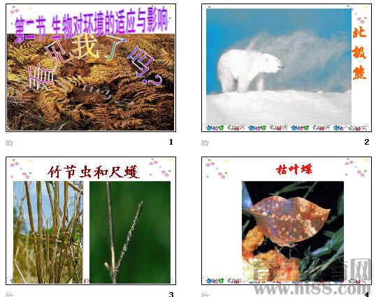 生物对环境的适应与影响ppt 2份打包 济南版