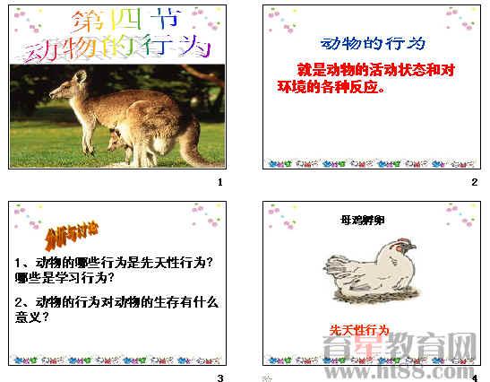 动物的行为ppt23 济南版