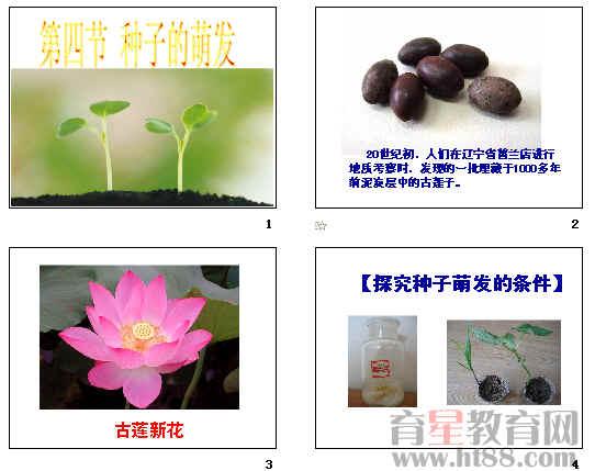 种子的萌发ppt24 济南版