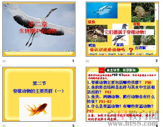 脊椎动物的主要类群ppt1