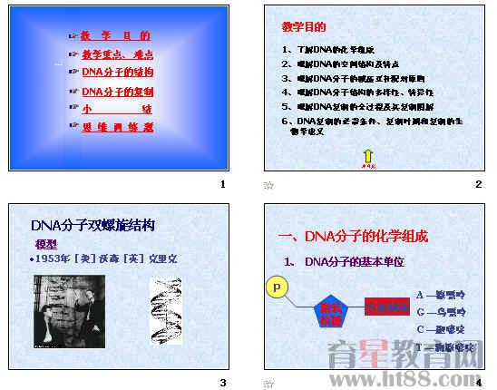 群落的结构 DNA分子的结构 31张ppt.ppt DNA分子的结构 教学设计.doc   教学设计   教学主题 DNA分子的结构   一、教材分析   《DNA分子的结构》既是对已学孟德尔遗传定律和减数分裂知识的进一步深入,更是学习整个遗传部分的基础。该内容几乎每年高考都有涉及。   课本首先用较大篇幅介绍了科学家们构建DNA双螺旋结构模型的故事,旨在使学生了解科学家的研究过程,学习和体会科学家们善于捕获和分析信息,合作研究及锲而不舍的