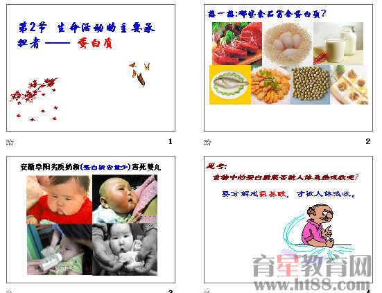 生命活动的主要承担者-蛋白质 第2节学案.doc 第2节蛋白质教案.doc 第二节 生命活动的主要承担者-蛋白质.ppt 第二节练案.doc   2.2《生命活动的主要承担者蛋白质》教案   教学目标:(1)说明氨基酸的结构特点,以及氨基酸形成蛋白质的过程。   (2)概述蛋白质的结构和功能   教学重点:(1)氨基酸的结构特点,以及氨基酸形成蛋白质的过程。   (2)蛋白质