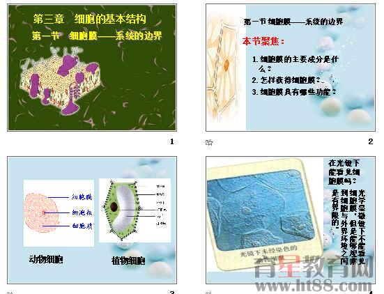 细胞器的结构图立体