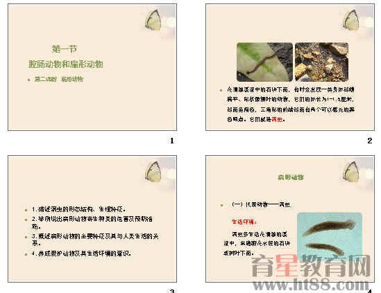 课件主要讲解了涡虫的形态结构,生理特征等内容.