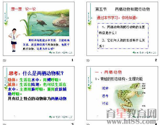 两栖动物和爬行动物ppt5