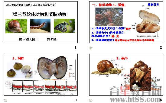 课件主要讲解了常见的软体动物和节肢动物等内容